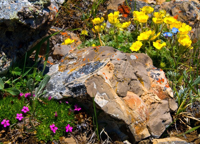 αλπινάριουμ-3-διακόσμηση-κήπου-alpinarioum-ediva.gr