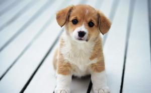 new-puppy