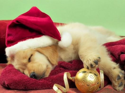 Τα 40 Καλύτερα Ελληνικά & ξένα Χριστουγεννιάτικα τραγούδια!