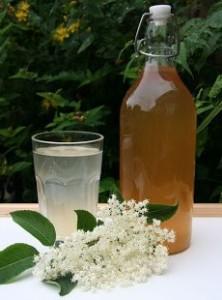 elder-flowers-gripi-rofima-botana