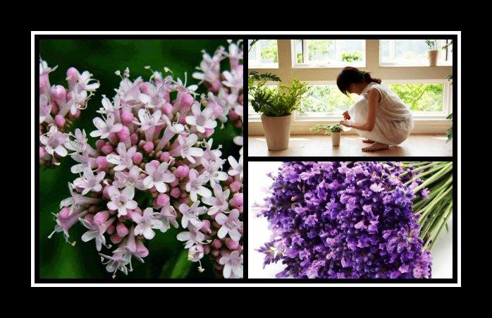 7 Φυτά εσωτερικού χώρου για καθαρή ατμοσφαίρα στο σπίτι!
