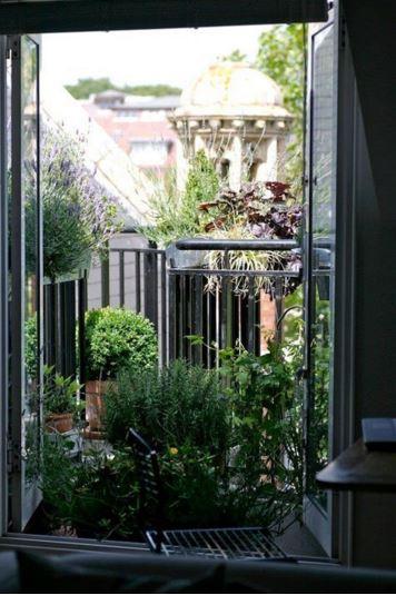 balcony full of plants