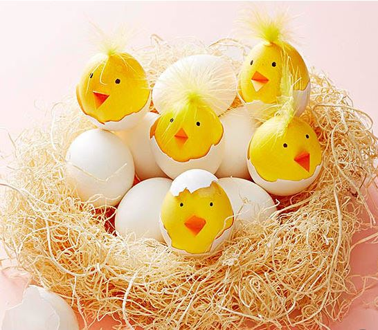 chirping chick eggs