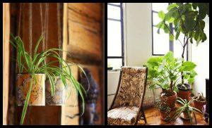 12+1 Φυτά εσωτερικού χώρου που είναι εύκολο να διατηρήσεις!