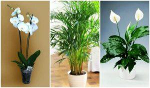 10 Φυτά για να διακοσμήσεις τον εσωτερικό σου χώρο!