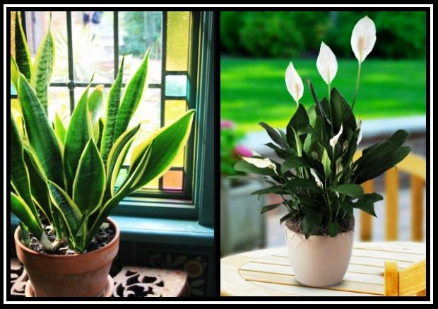 7 Φυτά που μπορείς να βάλεις στο σπίτι σου για να έχεις καλή τύχη!