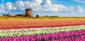 kipos me tulipes