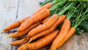 carrots karota