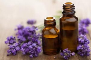 lavender levanda