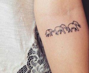elefantakia oikogeneia
