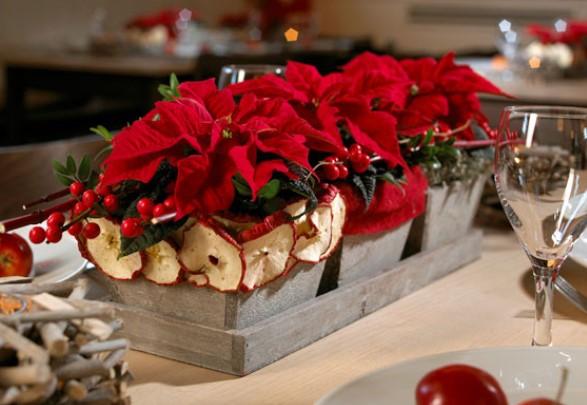 Πως να φροντίσεις το αλεξανδρινό φέτος τα Χριστούγεννα!
