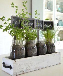 φυτά σε βαζάκια