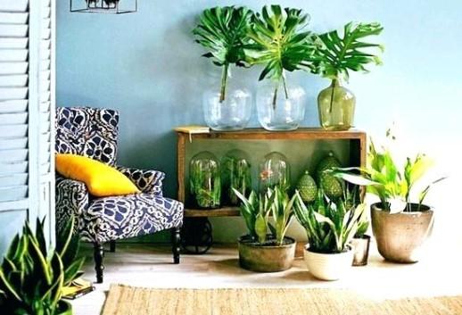 φυτά και γλάστρες πράσινο στο σαλόνι πολυθρόνα διακόσμηση 2020