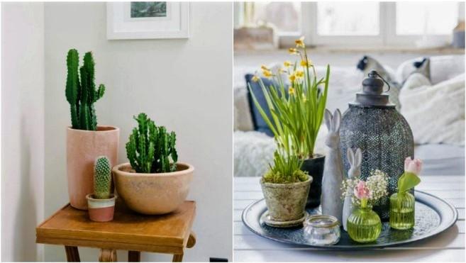 23 Ιδέες διακόσμησης τραπεζιού με φυτά εσωτερικού χώρου!