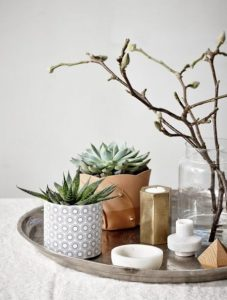 δίσκος με γλαστράκια παχύφυτα κεριά κλαδί διακόσμηση τραπεζιού φυτά