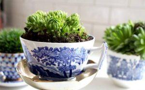 vintage κούπες με φυτά διακόσμηση τραπεζιού φυτά