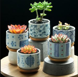 γλαστράκια με παχύφυτα σε διάφορα ύψη διακόσμηση τραπεζιού φυτά