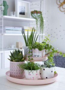 γλαστράκια σε ροζ πιατέλα δίσκος διακόσμηση τραπεζιού φυτά