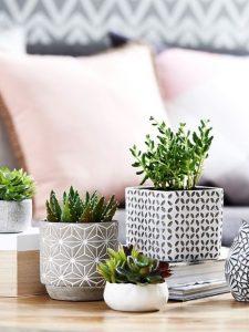 μικρά γλαστράκια σε διάφορα μεγέθη διακόσμηση τραπεζιού φυτά