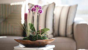 μικρή ορχιδέα μοβ τραπέζι