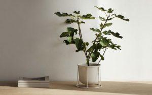 απλή άσπρη γλάστρα τραπέζι τραπέζι διακοσμήσεις φυτά