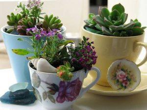 παχύφυτα σε πολύχρωμες κούπες διακόσμηση τραπεζιού φυτά