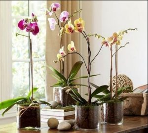 πολλές ορχιδέες διακόσμηση τραπεζιού φυτά