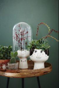 σύνθεση με διάφορα φυτά διακόσμηση τραπεζιού φυτά