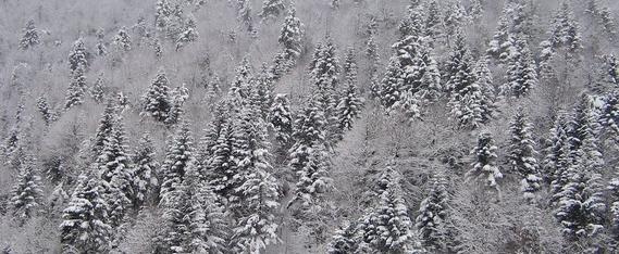 Ελατοχώρι χιονισμένη πλαγιά
