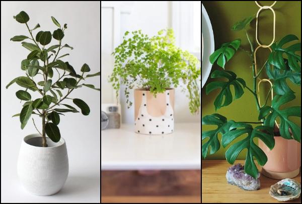 5 Πανέμορφα φυτά εσωτερικού χώρου για το σπίτι σου!