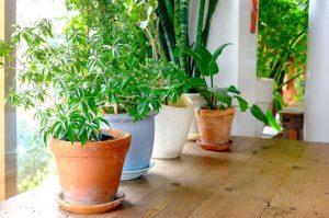 γλάστρες με φυτά εσωτερικού χώρου
