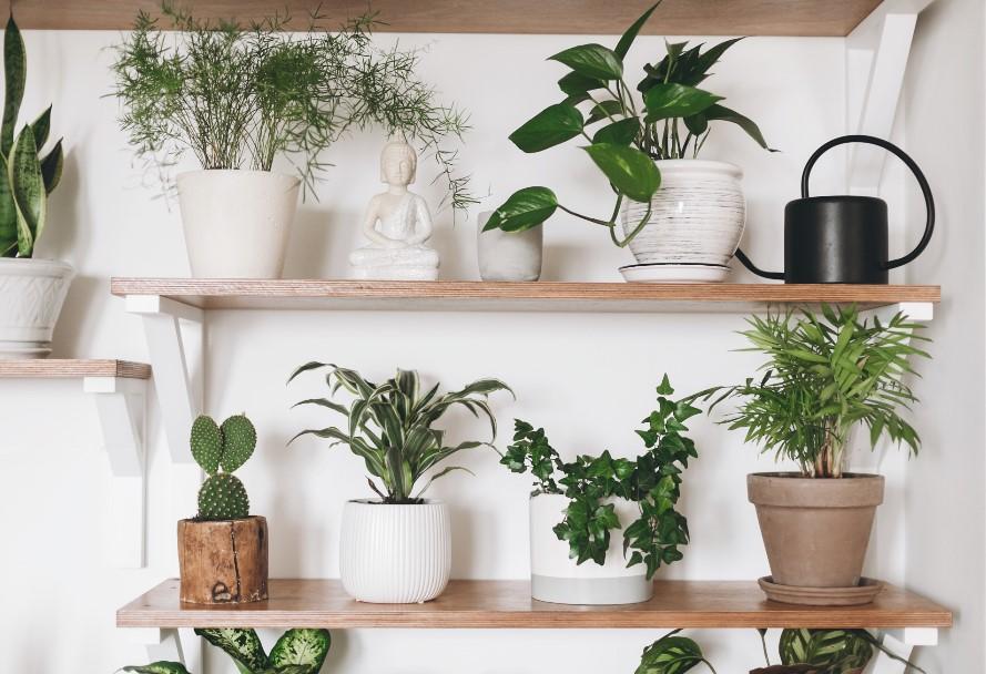 γλάστρες με φυτά σε ράφια μυρίζει τέλεια σπίτι