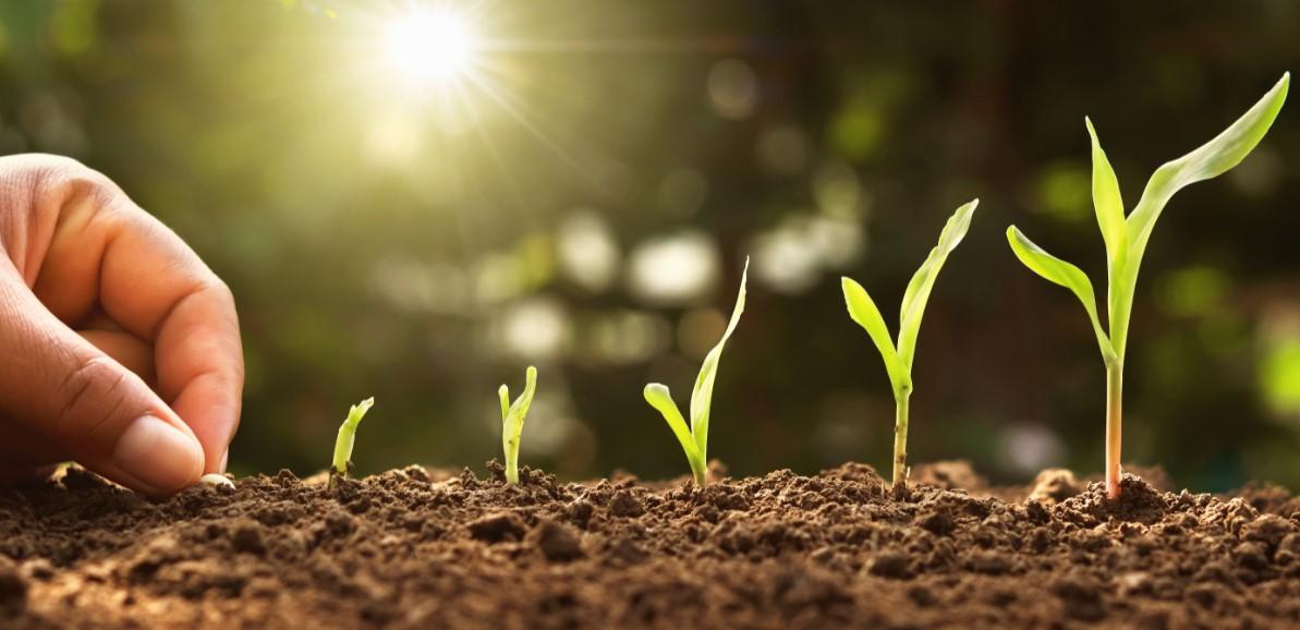 η γνώση ότι θα λάβεις τους καρπούς από τις προσπάθειες σου, υπομονή και αφοσίωση