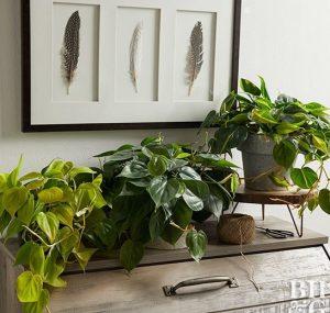 φυτά εσωτερικού χώρου φροντίδα