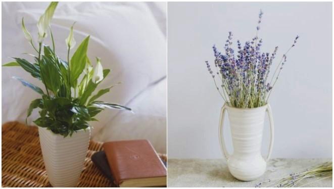 6 Φυτά και λουλούδια που σου φτιάχνουν τη διάθεση!