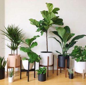 φυτά στο σπίτι