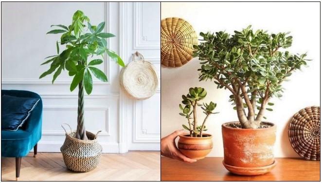 6 Φυτά που θα φέρουν θετική ενέργεια στο σπίτι σου!