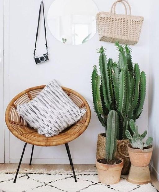 γλάστρες με κάκτους πολυθρόνα μαξιλάρι