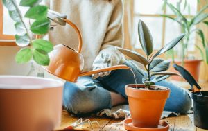 γυναίκα ποτίζει φυτό