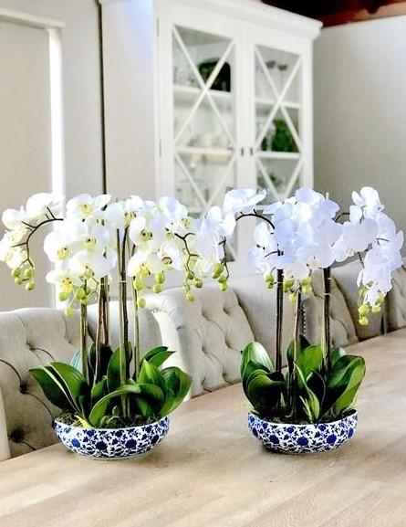 λευκές ορχιδέες μπλε άσπρο γλαστράκι