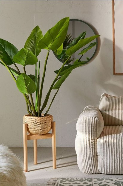 άσπρος καναπές κασπό μεγάλο φυτό
