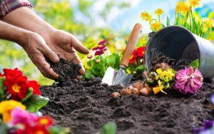 ενασχόληση με λουλούδια