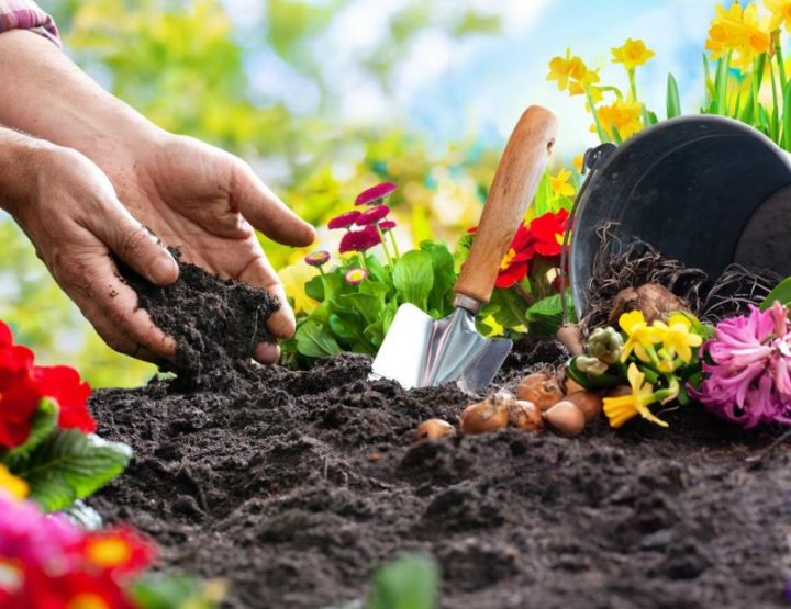 Γιατί η ενασχόληση με τη κηπουρική είναι μια καλή ιδέα!