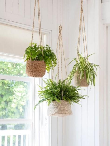 φυτά κρεμασμένα ταβάνι τοποθετήσεις φυτά
