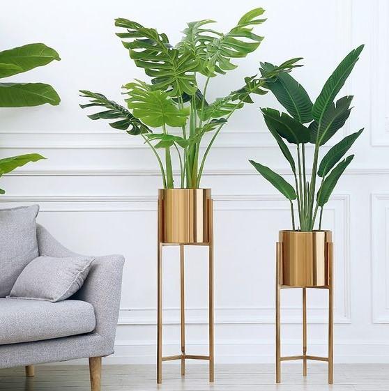 χρυσά ψηλά βάζα φυτά