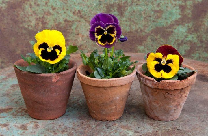 5 Φυτά για το μπαλκόνι σου που είναι εύκολο να διατηρήσεις!