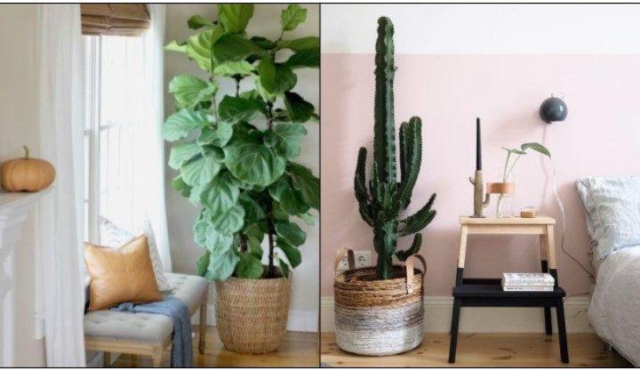 5 Φυτά που θα δώσουν προσωπικότητα στο σπίτι σου!