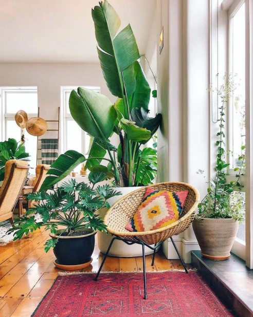 φυτά ψάθινη καρέκλα