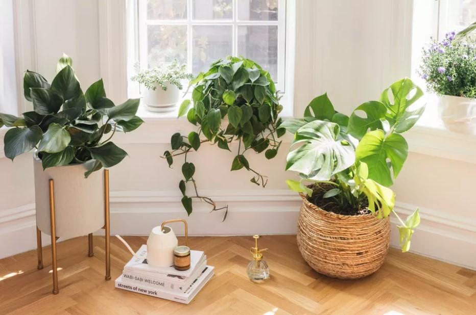 φυτά παράθυρο βιβλία χειμώνας