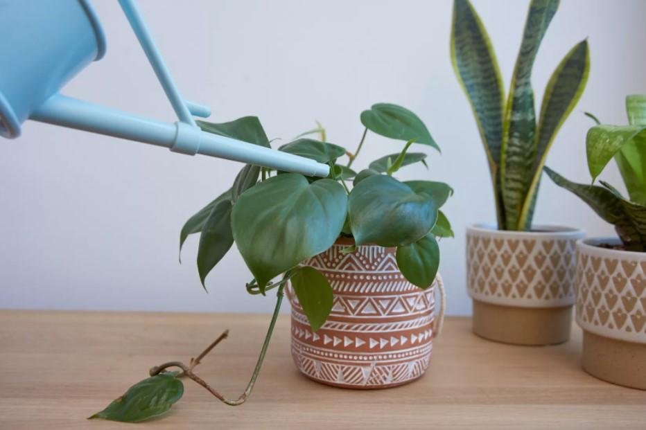 ποτιστήρι γλάστρα φυτά